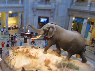 Visitors at the rotunda of the National Museum of Natural History.